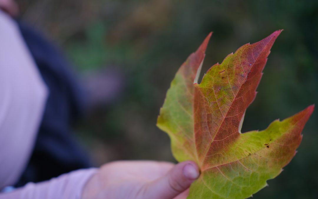Jahreszeiten-Stimmung Herbst