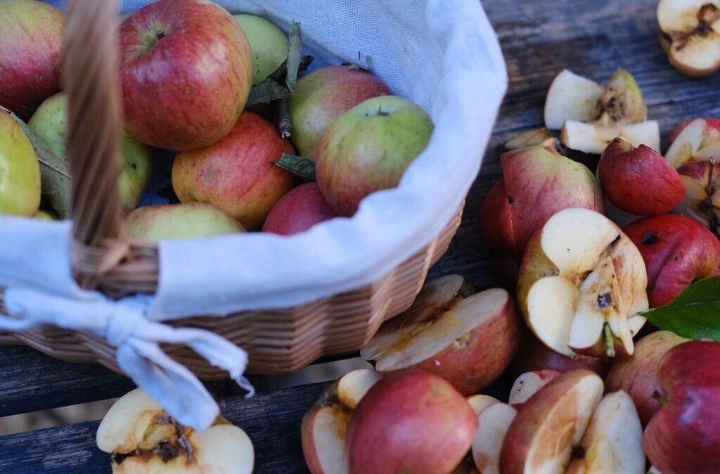 Der Apfel im Baum