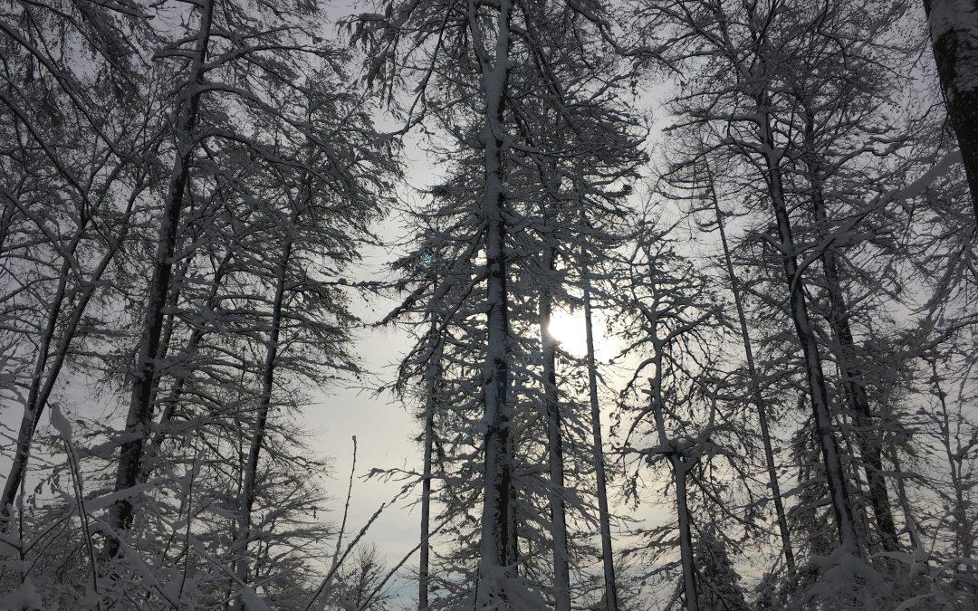 Jahreszeiten-Stimmung Winter