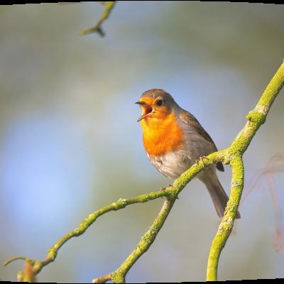 Sing a Song – Lieder in der Waldorfpädagogik