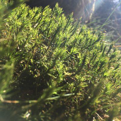 Waldorf Spruch zum Frühling